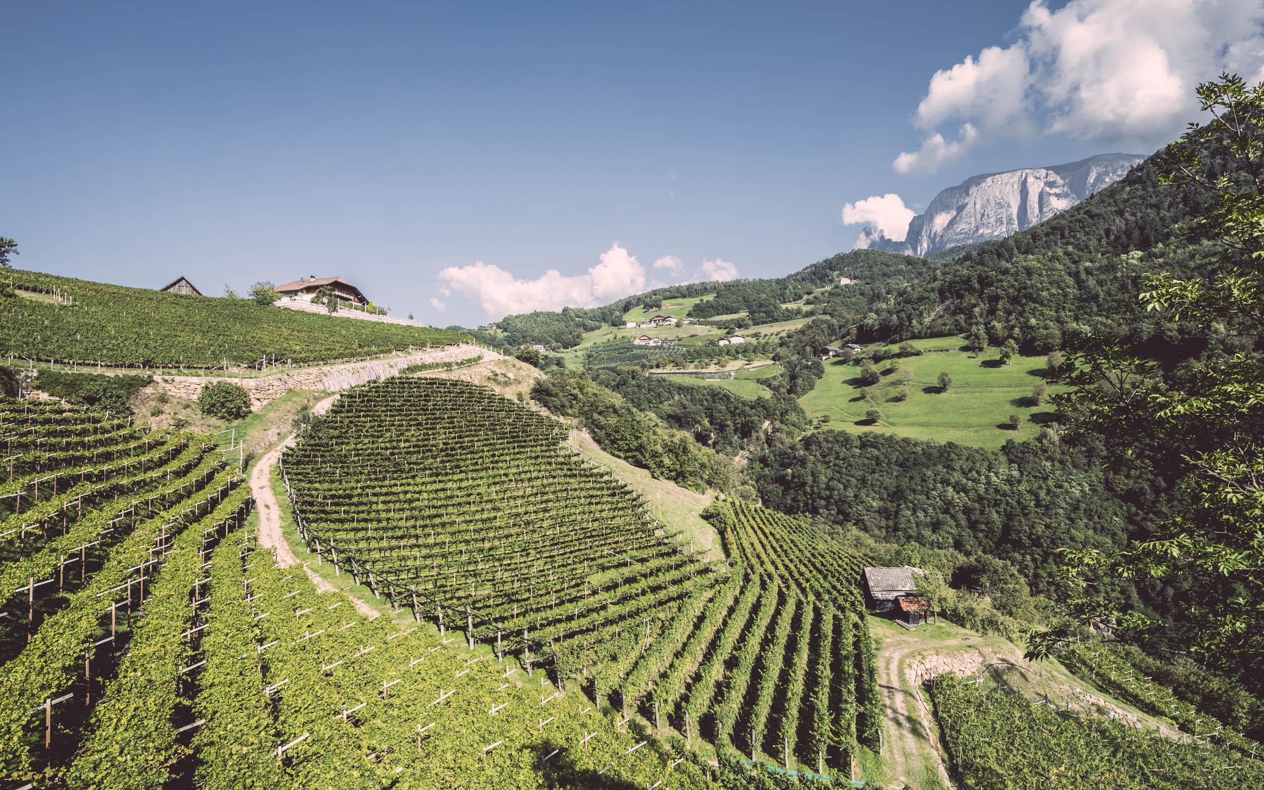 Weingut Ebner